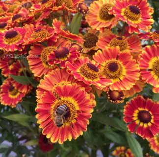 Bee in the Flowers