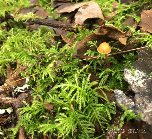 Tiny Forest Mushroom by Janet Crosby