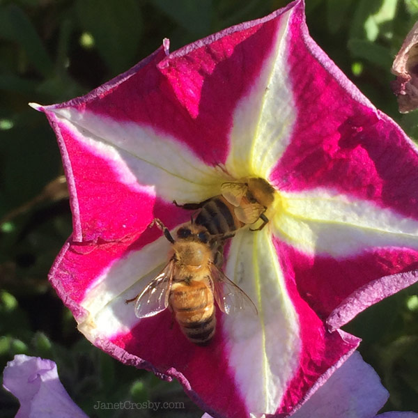 Bees lining up for what's left of the flowers